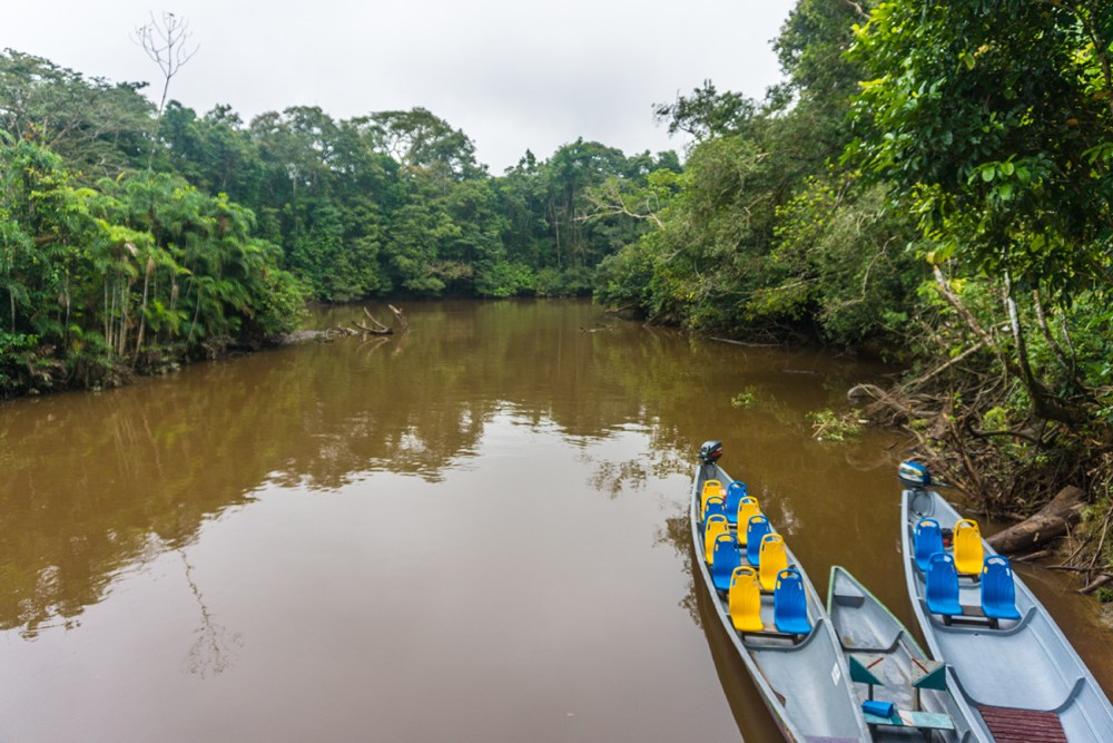 A guide to the Amazon Rainforest