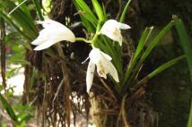 Amazing orchids