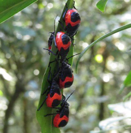 Adorable ladybugs