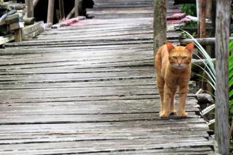cats in kuching