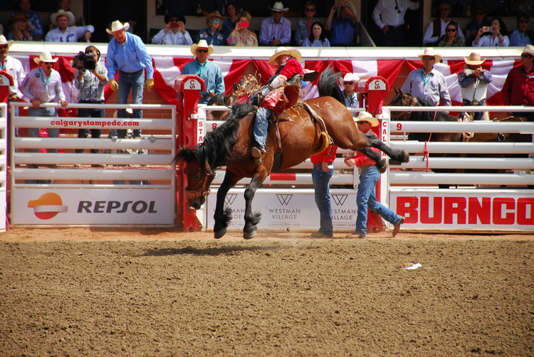 Image of a cowboy riding bareback at the Calgary Stampede rodeo