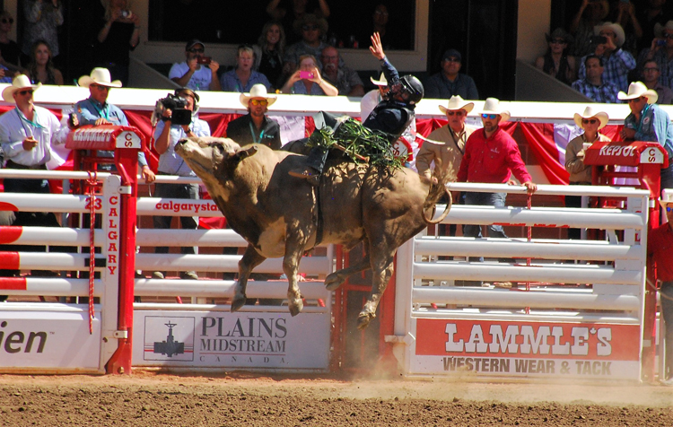 Image of bull riding at the Calgary Stampede rodeo