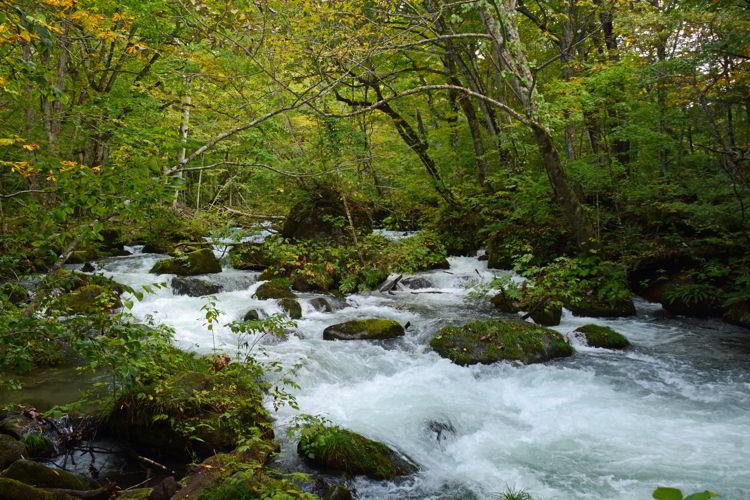 An image of Oirase Stream - Lake Towada and Oirase Gorge