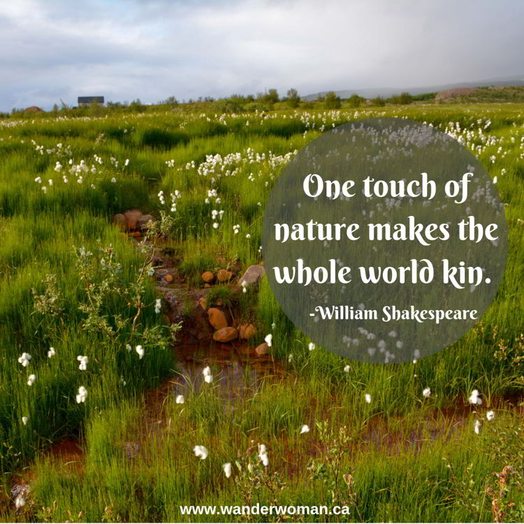An image of cotton grass along a roadside in Iceland - meaningful quotes about nature - One touch of nature makes the whole world kin - William Shakespeare