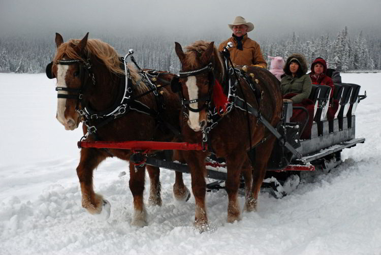 An image of two horses pulling a sleigh at Pyramid Lake in Jasper National Park in Alberta, Canada - Winter in Jasper - Stunning Photos