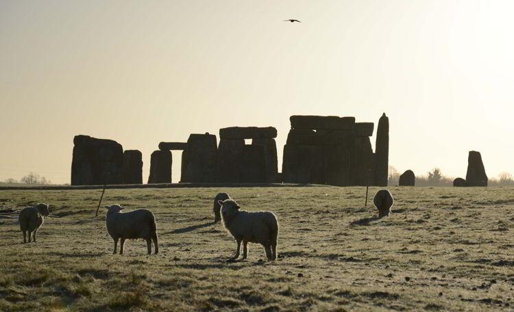 An image of sheep grazing with the Stonehenge site behind them near Salisbury, UK - Stonehenge inner circle tours