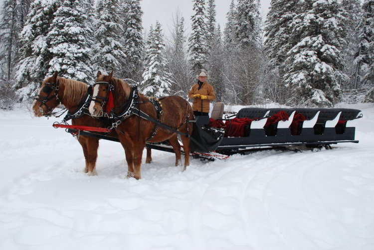 Image of a man driving a team of horses pulling a sleigh at Pyramid Lake in Jasper National Park - Avoid the Winter Blues