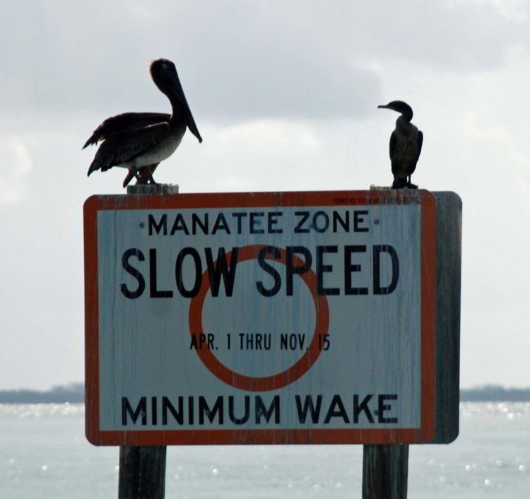 An image of a manatee warning sign near Cabbage Key, Florida - cheeseburger in paradise