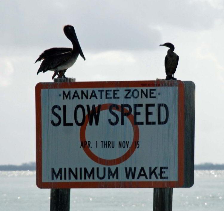 An image of a manatee warning sign near Cabbage Key, Florida - cheeseburger in paradise