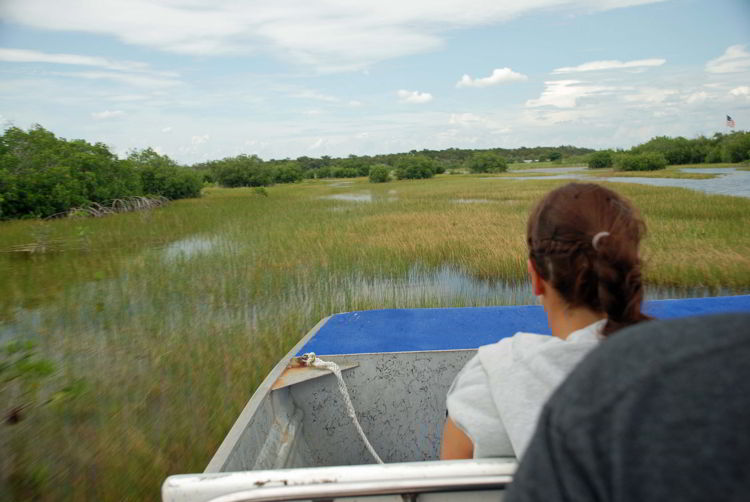 An image of the the view looking out over the swampland from an airboat in the Florida Everglades.