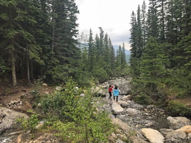 An image of Heart Creek in Kananaskis, Alberta.