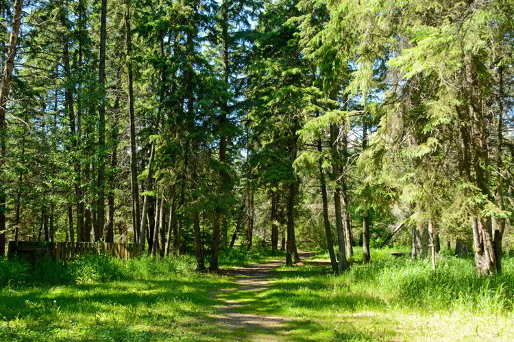 An image of a hiking trail in Big Knife Provincial Park in Alberta, Canada.