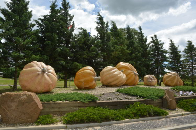 An image of the Smoky Lake giant pumpkins. Alberta road trips. Big things in Alberta.