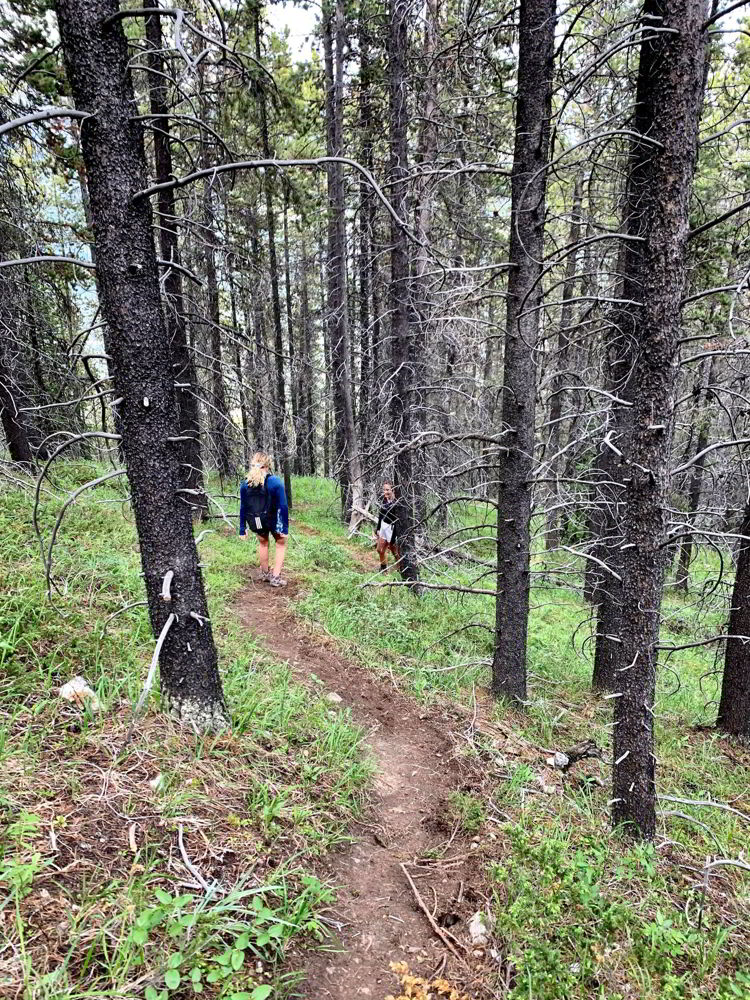 An image of a woman hiking through the woods in Kananaskis, Alberta, Canada.