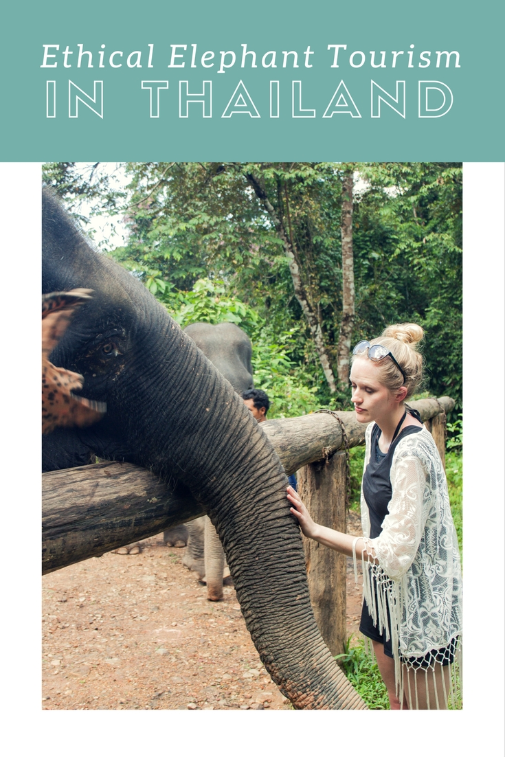 Don't support unethical animal tourism. Instead meet elephants up close and personal, and back ethical elephant tourism at the Phang Nga Elephant Park.