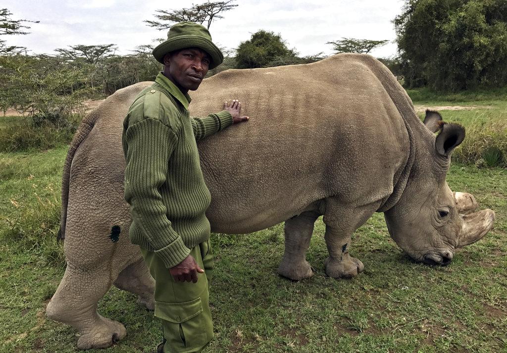Kenya Ailing Rhino_318481