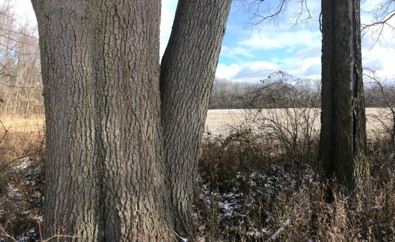 ACRES Cedar Creek land_1522791646136.jpg.jpg