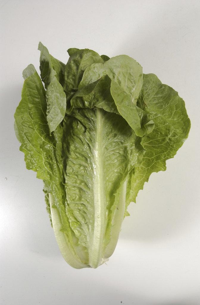 Lettuce Outbreak romaine