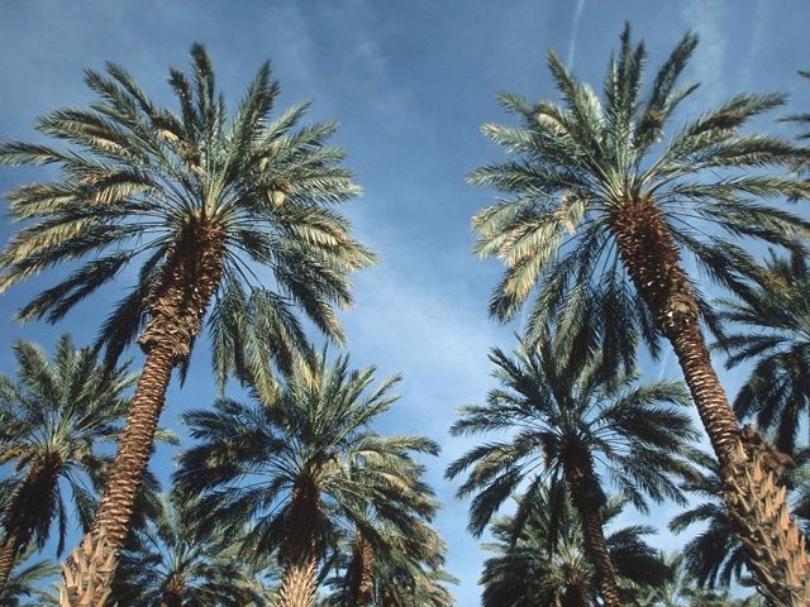 PalmTrees_1540144692257.jpg