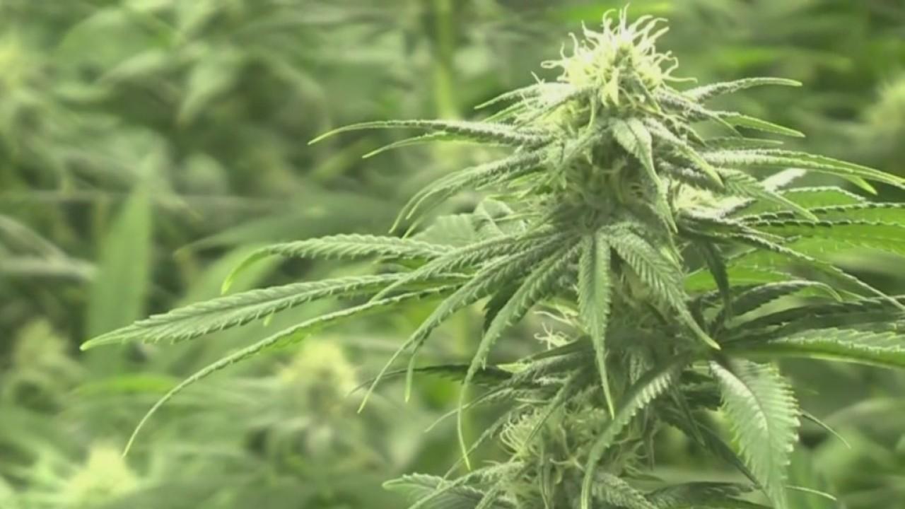 Lawmaker talks likelihood of medical marijuana coming to Indiana