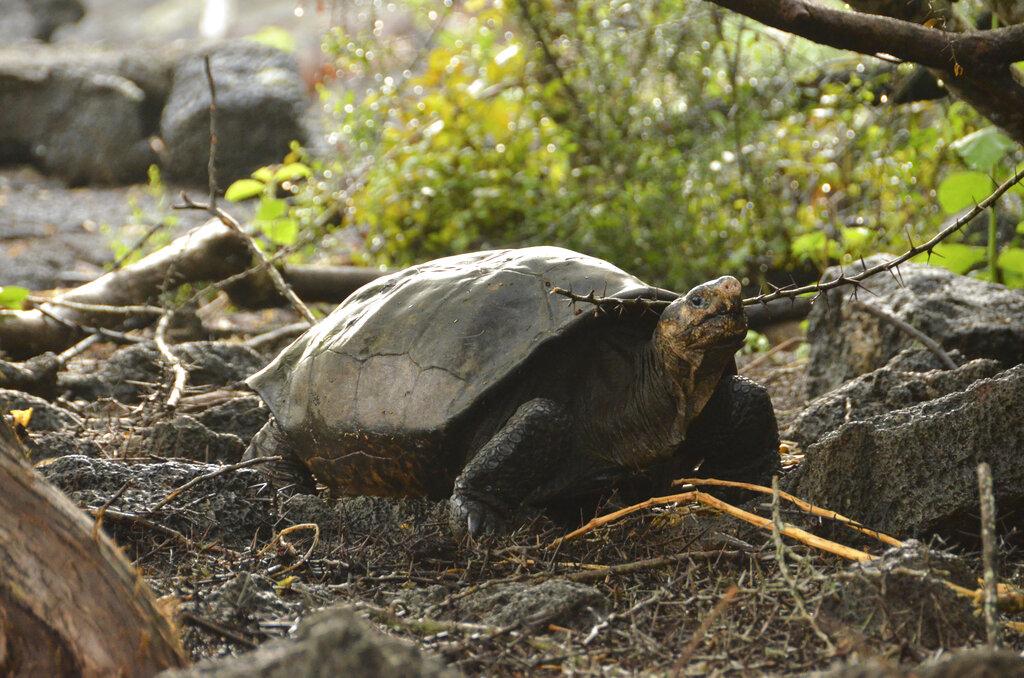 Ecuador Tortoise_1550701085094