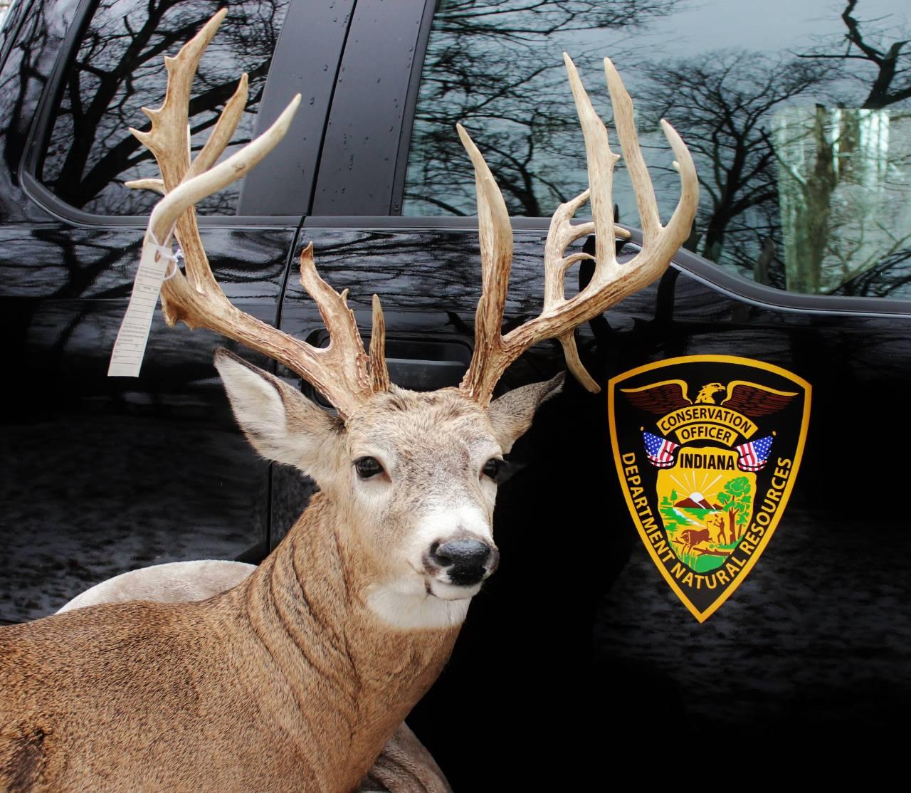 giant Buck illegally taken DNR Gill