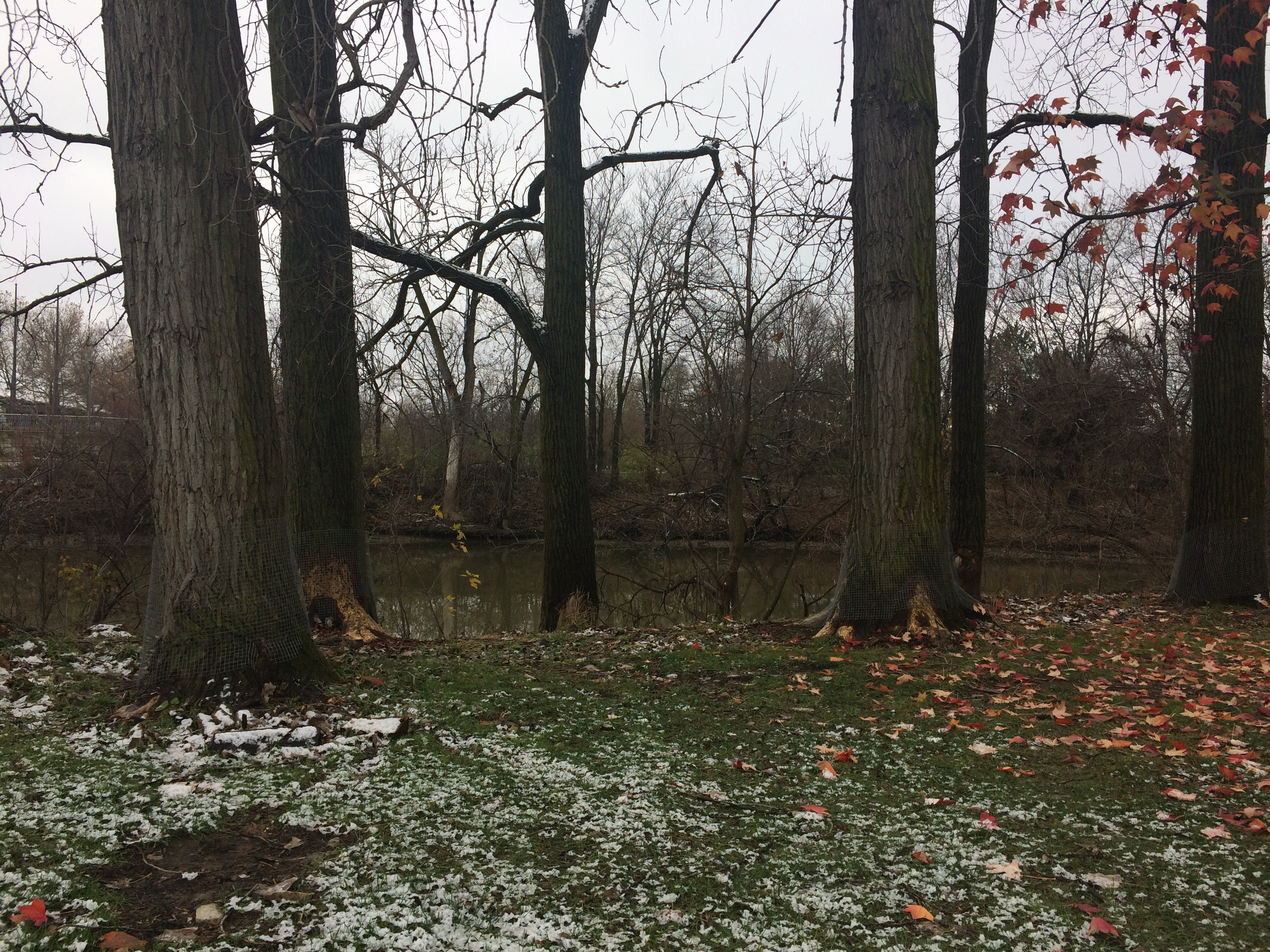 Northwest Indiana Counties Target Disruptive Beavers