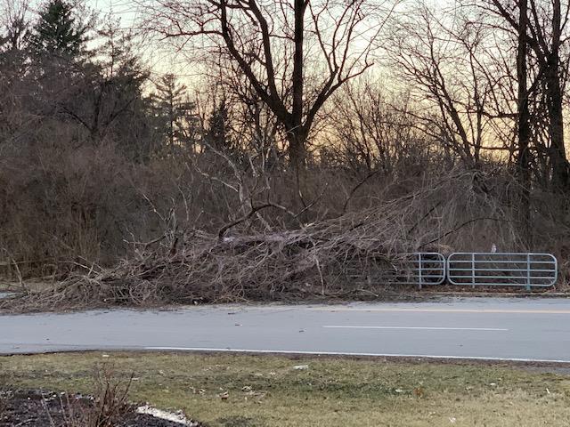 tree damage_1552608797422.jpeg.jpg