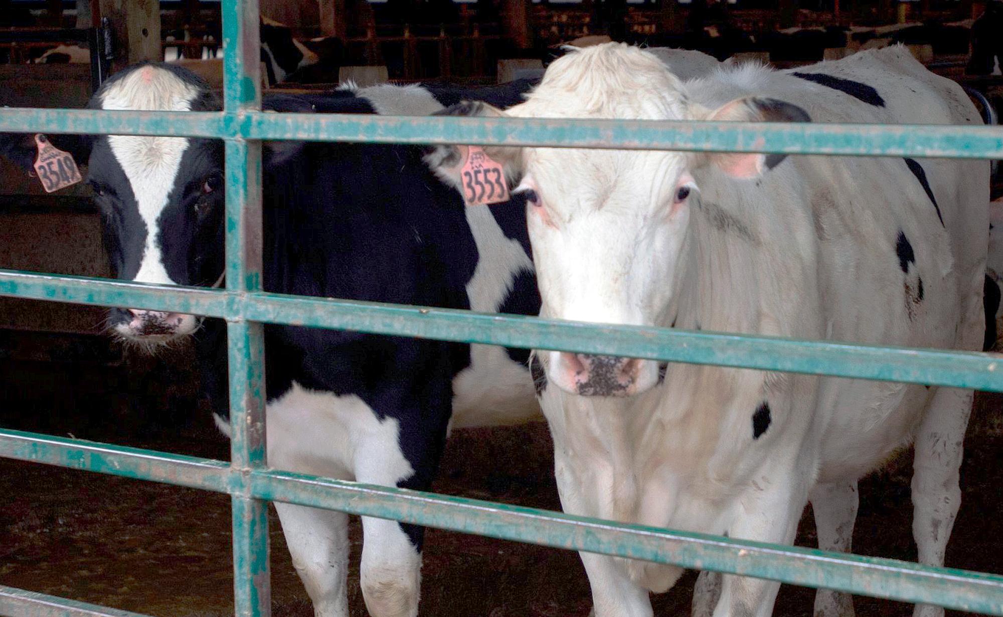 Dairy Help_1554846255152
