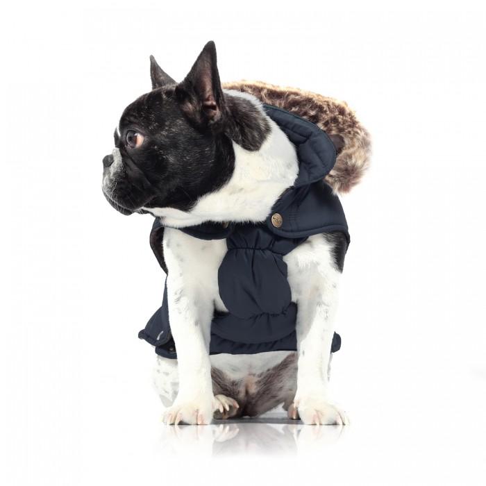 recherche manteau pour chien pas cher