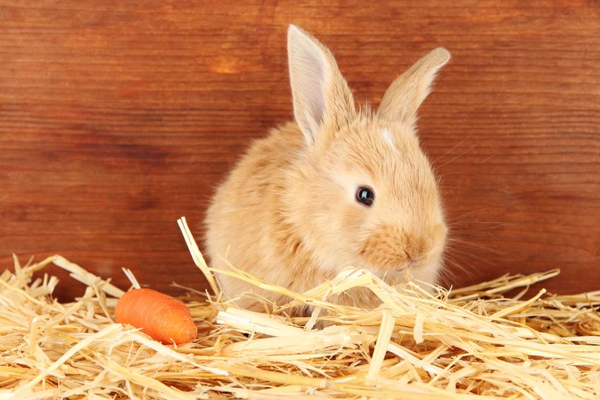 cage a lapin comment preparer son habitat wanimoveto