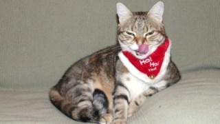 Cadeaux de noel pour chat