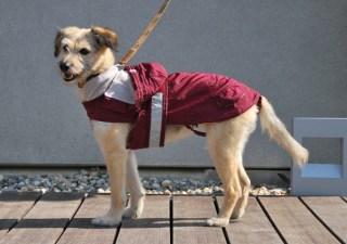 vêtement pour chien