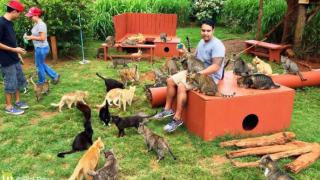 sanctuaire pour chat hawaii