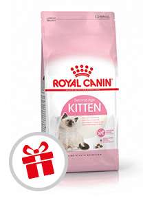 croquettes Royal Canin Chaton