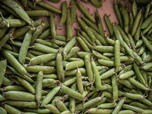 Ventegodtgaard – peas