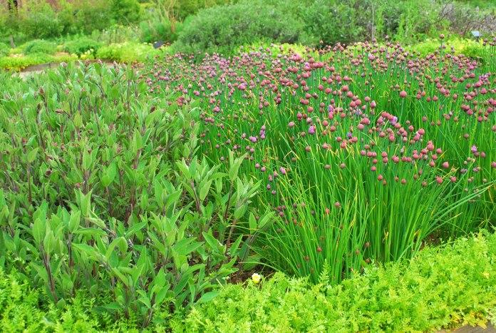 hoe kan het anders, de herb garden