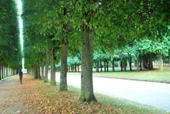 Versailles_jardins_arbres136