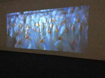 Eendenkwekerijbeelden gemonteerd in de film over Beijing