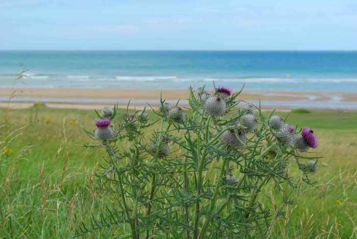 Omaha beach, beroemdste strand in Normandië