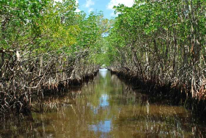Florida_Evergladecity