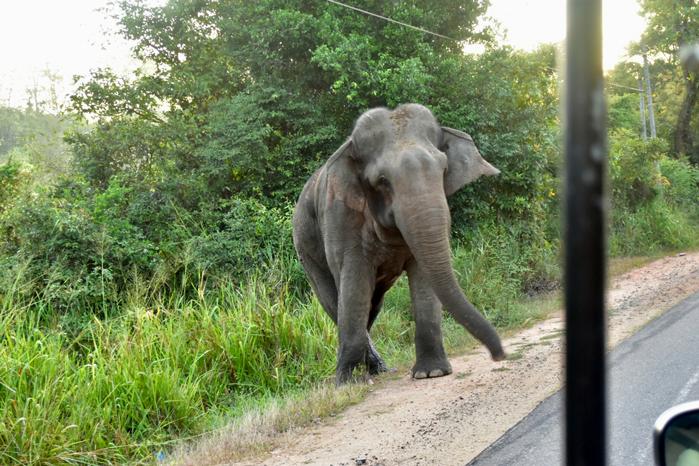 Polonnaruwa olifanten