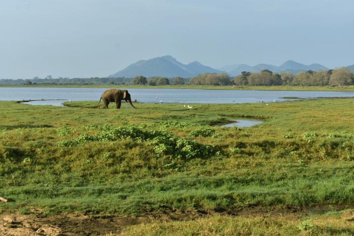 Olifantenbad Minneriya NP Sri Lanka