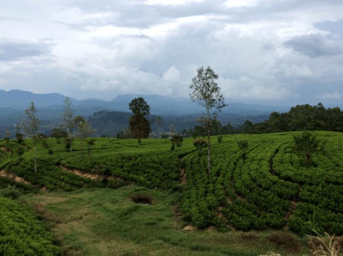 treinreis Nanu Oya- Ella Sri Lanka