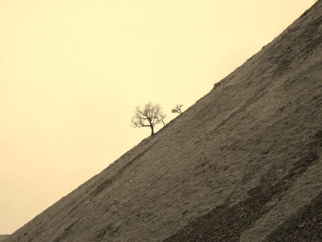 Hillside in sepia