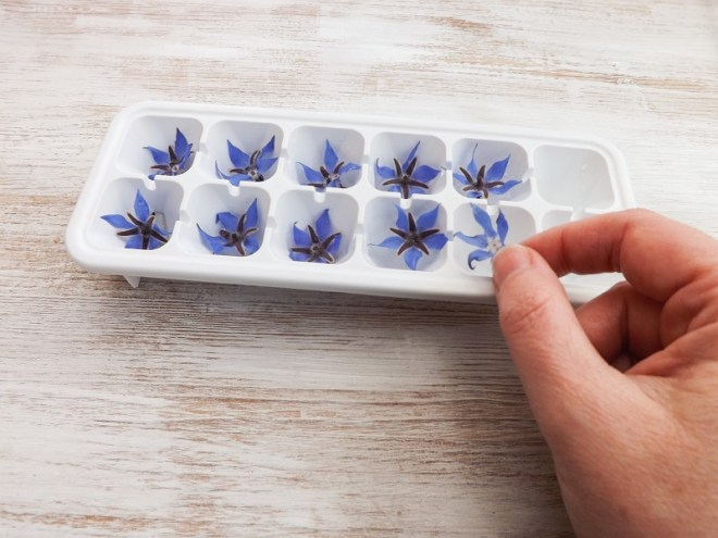 borage ice tray