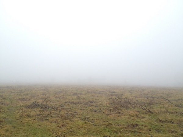 Heavy fog on a moor