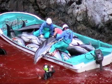 De zinloze slachting van dolfijnen in 'The Cove' in beeld. De situatie verandert niet, door niét naar dit soort beelden te kijken..!