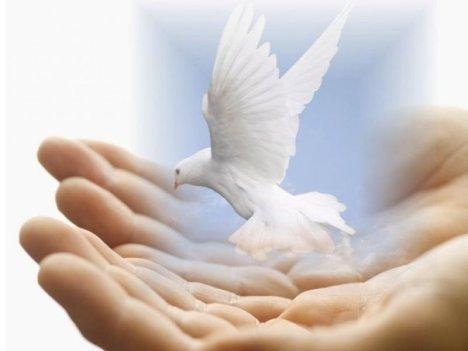 Animal-Spirituality-Humanity-Healing