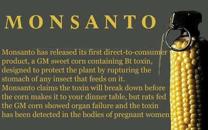 Monsanto food granate